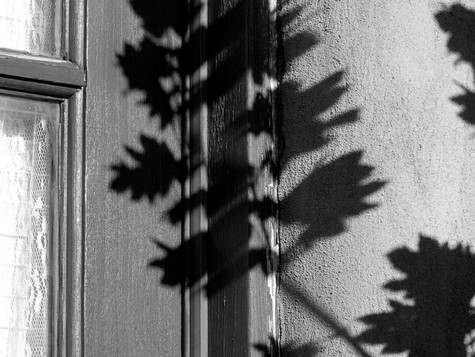 Leaf and Window