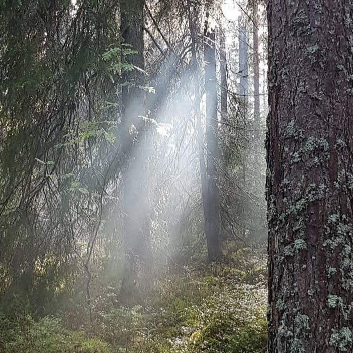 Bogesundslandet 5 Skogsbad med 5 teman inkl soppavslut