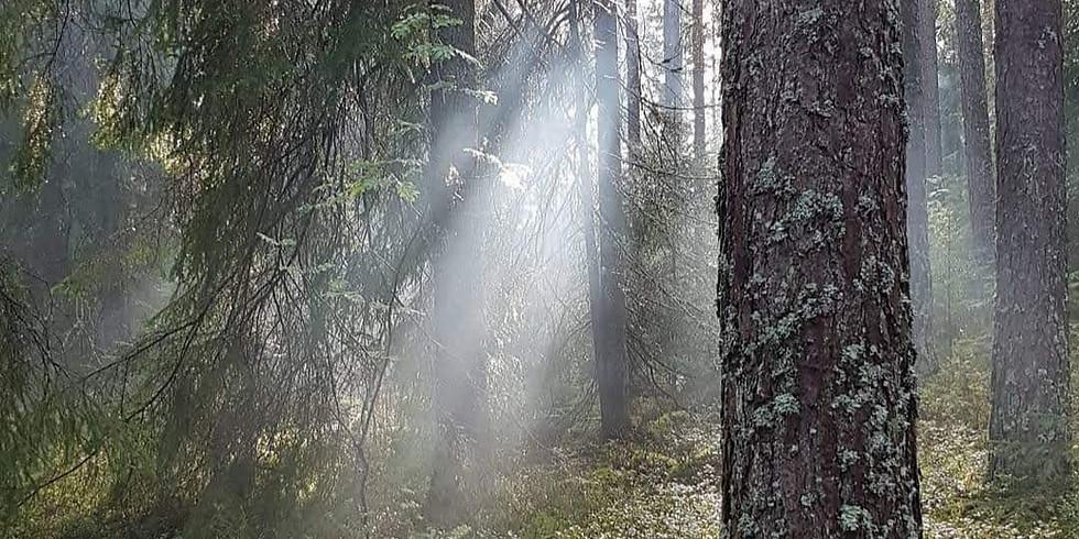Bogesundslandet, Vaxholm 5 Skogsbad med 5 teman inkl soppavslut