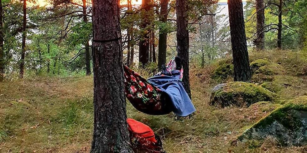 Vaxholm: Fem Skogsterapivandringar för inre stillhet med mindre sluten grupp