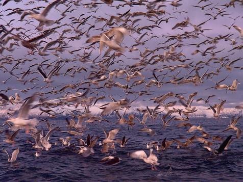 norway-birds.jpg