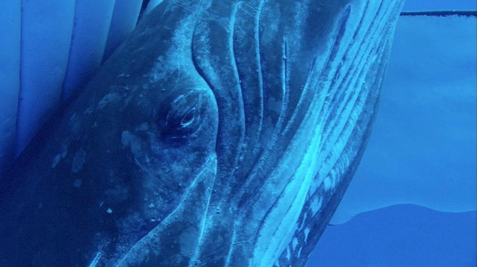 baleine-oeil.jpg