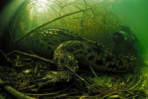 Didier et Crocodile-HR.jpg