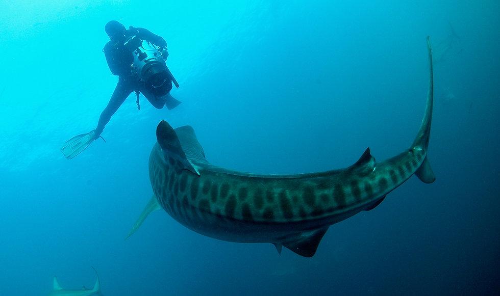 Didier-et-Requin-Tigre-1Mo.jpg