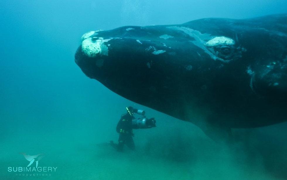 Subimageryprod-Didier-Noirot-whale-1080x