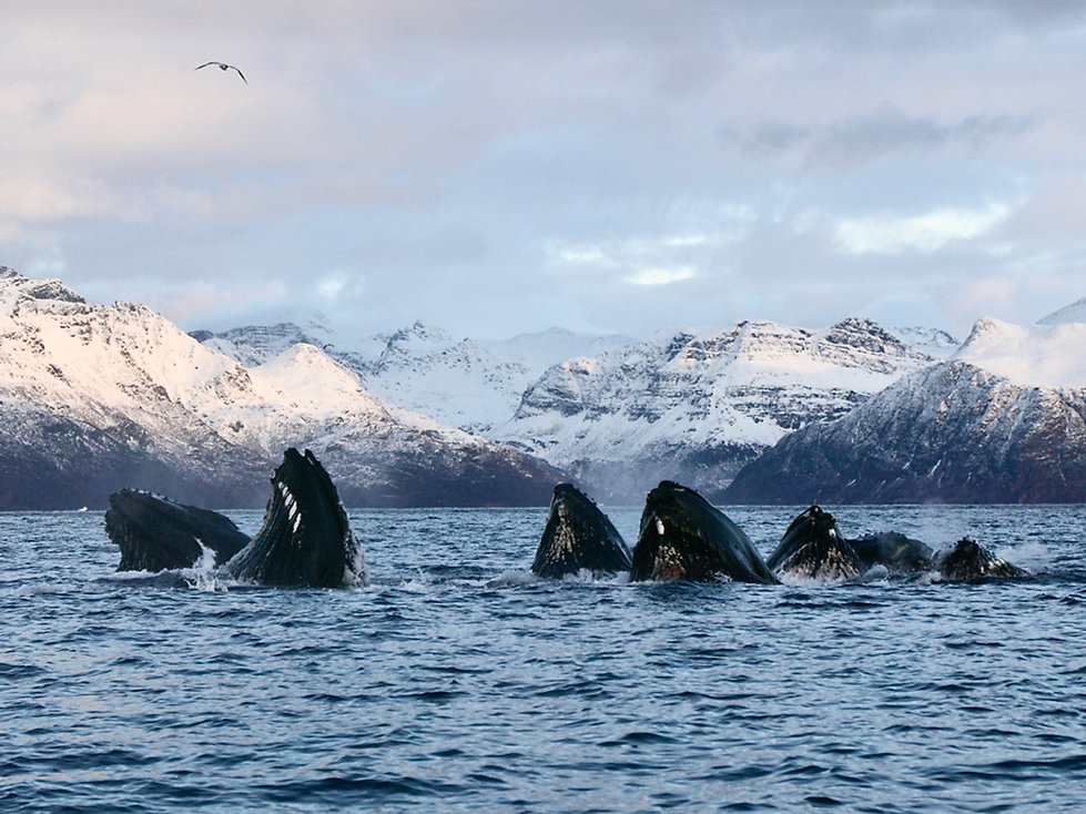 baleines.jpg