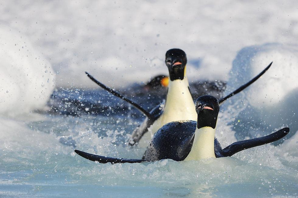 Antarctica-Jumping-out.jpg