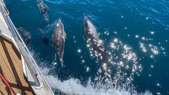 dauphins-balthazar.jpg