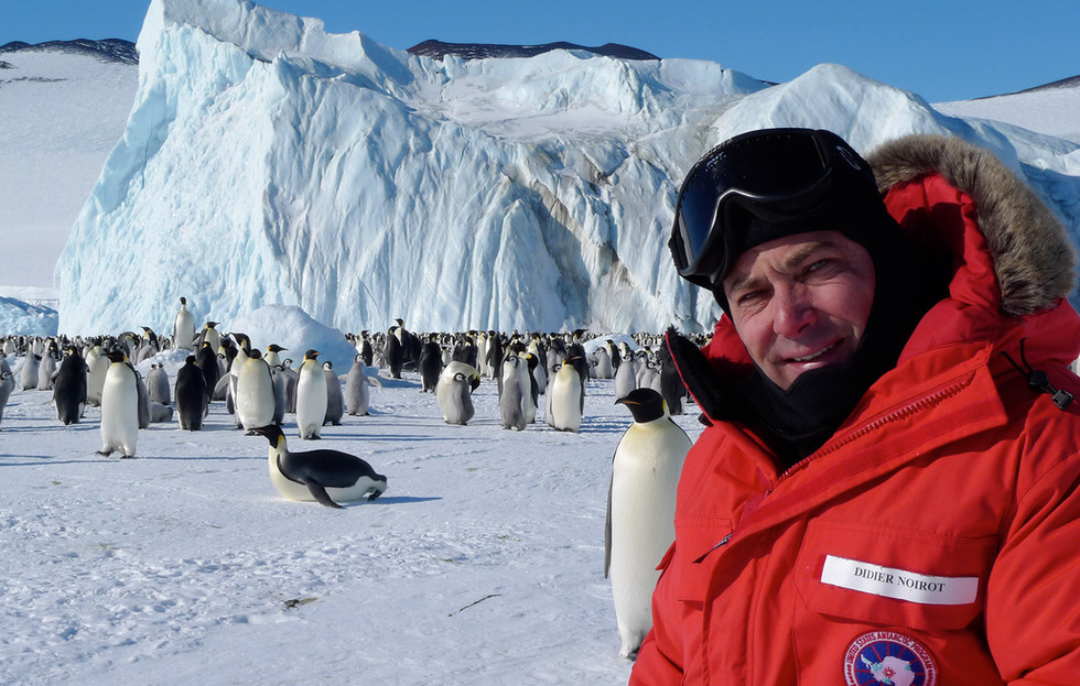 The-penguin-Colony-and-Didier.jpg