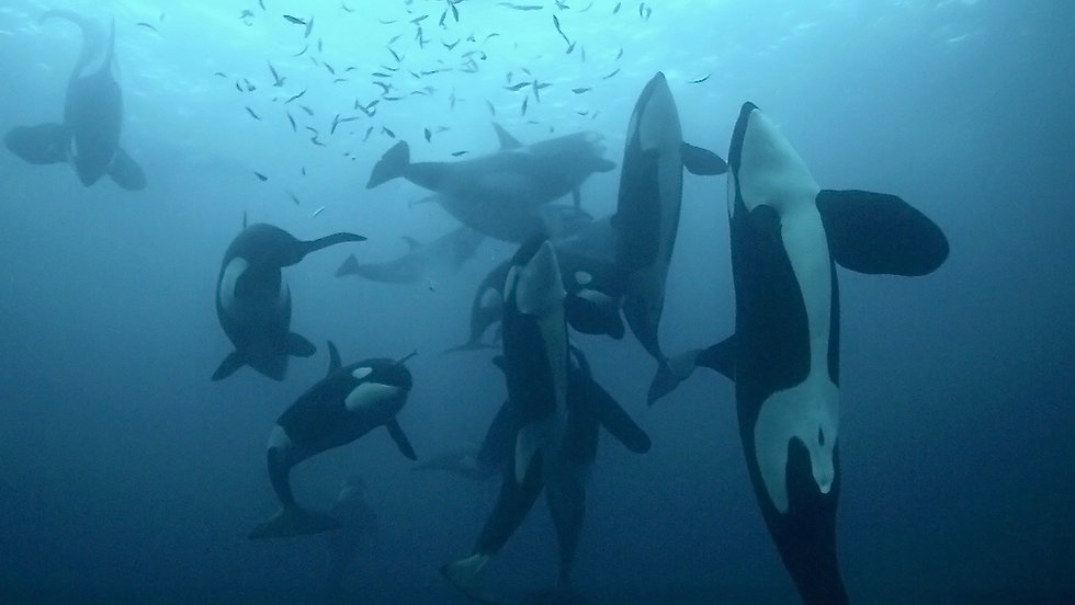 orques6.jpg