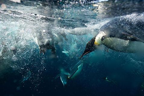 1 Mo-Penguins UW.jpg