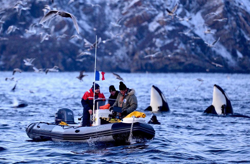 norway-orques.jpg