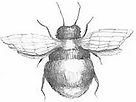 Bee color small.webp