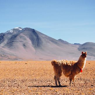 Boliviens FacettenREICHTUM
