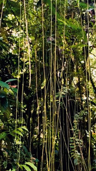 Grün, grüner, ECUADOR