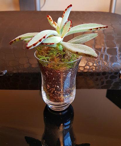 Succulent In Small Vase