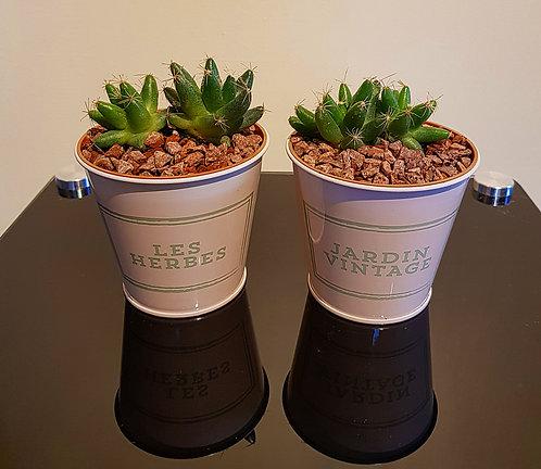 Cacti Display 5