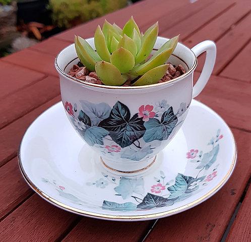 Succulent In A Teacup 4