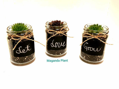 Succulents Guest Favors 10