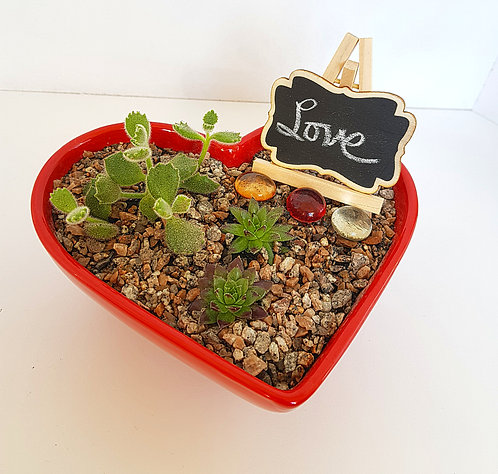 Succulents In A Heart Shaped Bowl 1
