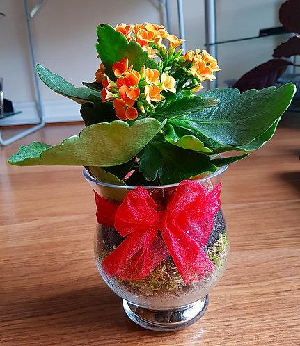 Orange Kalanchoe In A Glass Vase