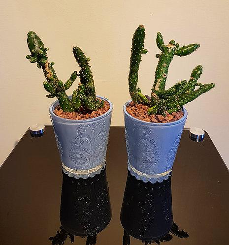 Cacti Display 3