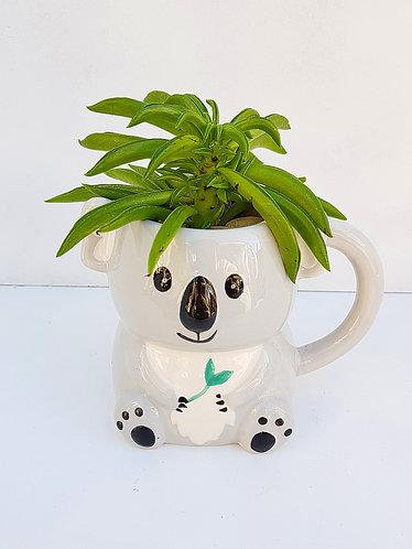 Succulent In A Koala Mug