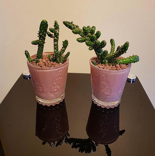 Cacti Display 4