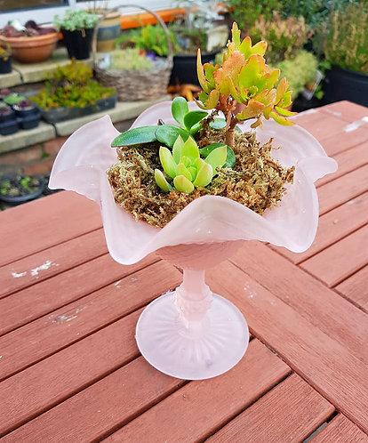 Succulents Arrangement 1