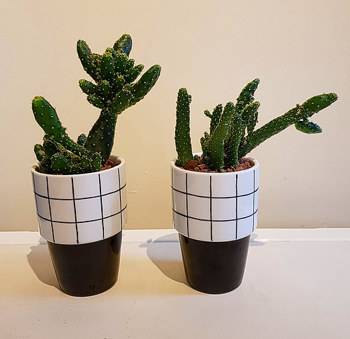 Cacti Display 1