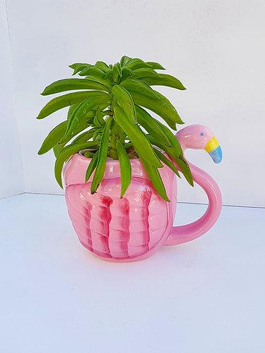 Succulent In A Flamingo Mug