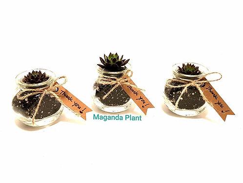 Succulents Guest Favors 2