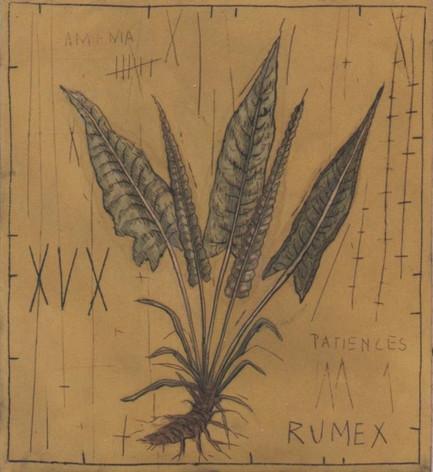 Rumex (30X35CM)