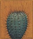 Cactus ( 30 x 35 cm)