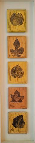 herbier panneau (38x140 cm)
