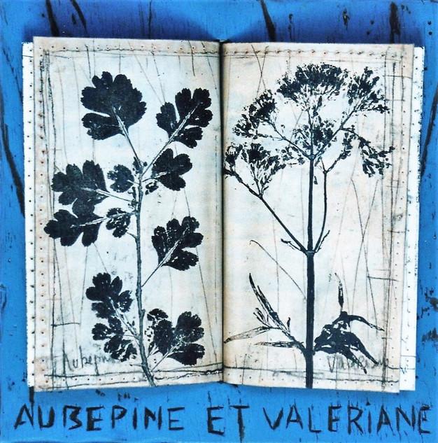 Aubépine et valériane (22x22cm)