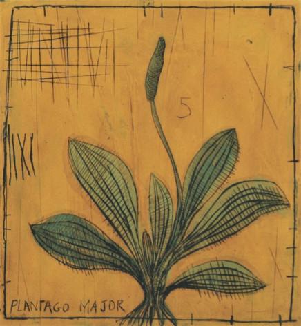 Plantain (30X35 cm)