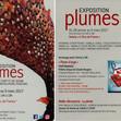 2017-plumes (3).jpg