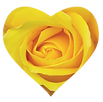 heart shaped yellow rose.png