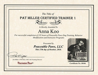 PMCT Certificate.jpg