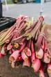 Roasted Rhubarb Parfait