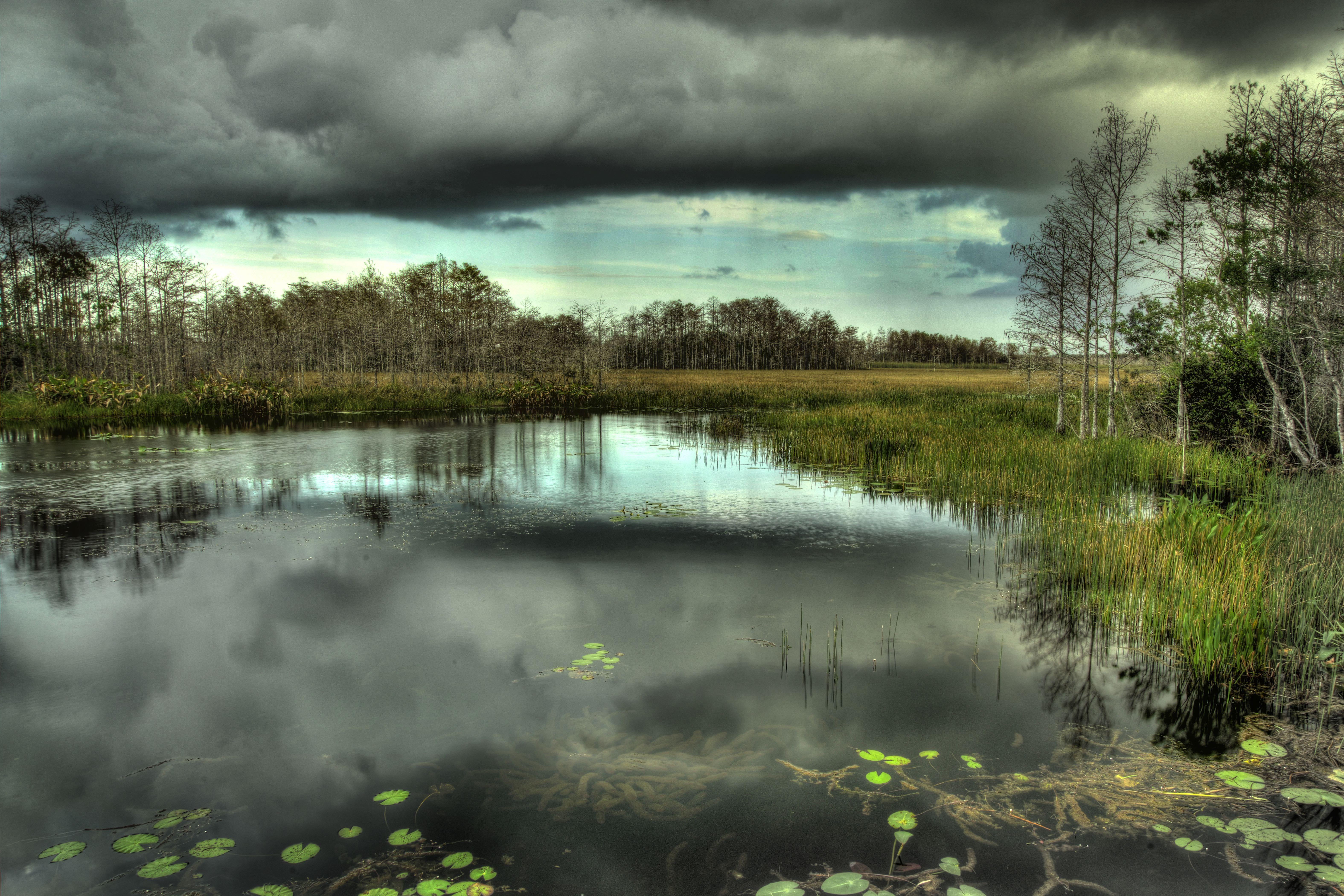 Wild Fla Swamp