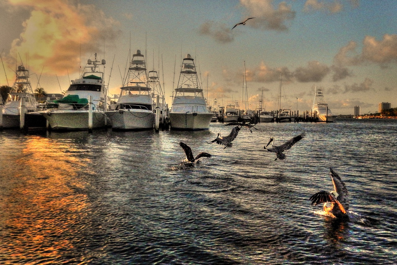 Harbor Pelicans