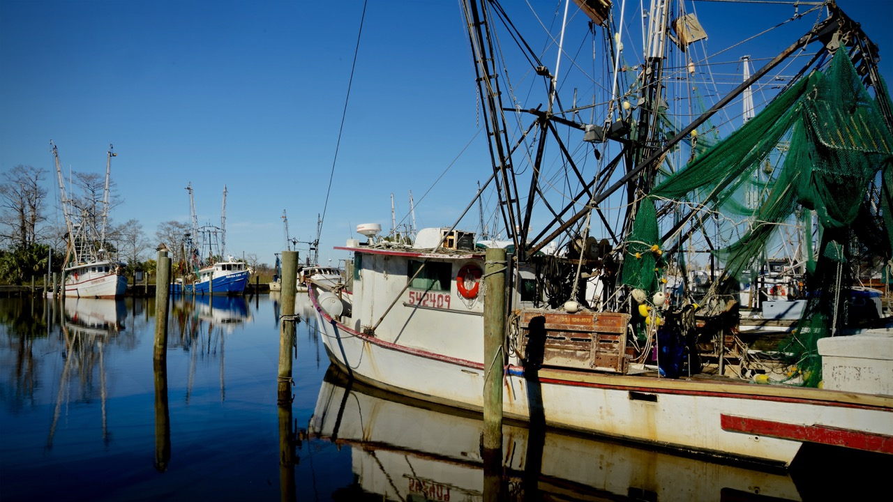 Shrimp Boats Apalachicola