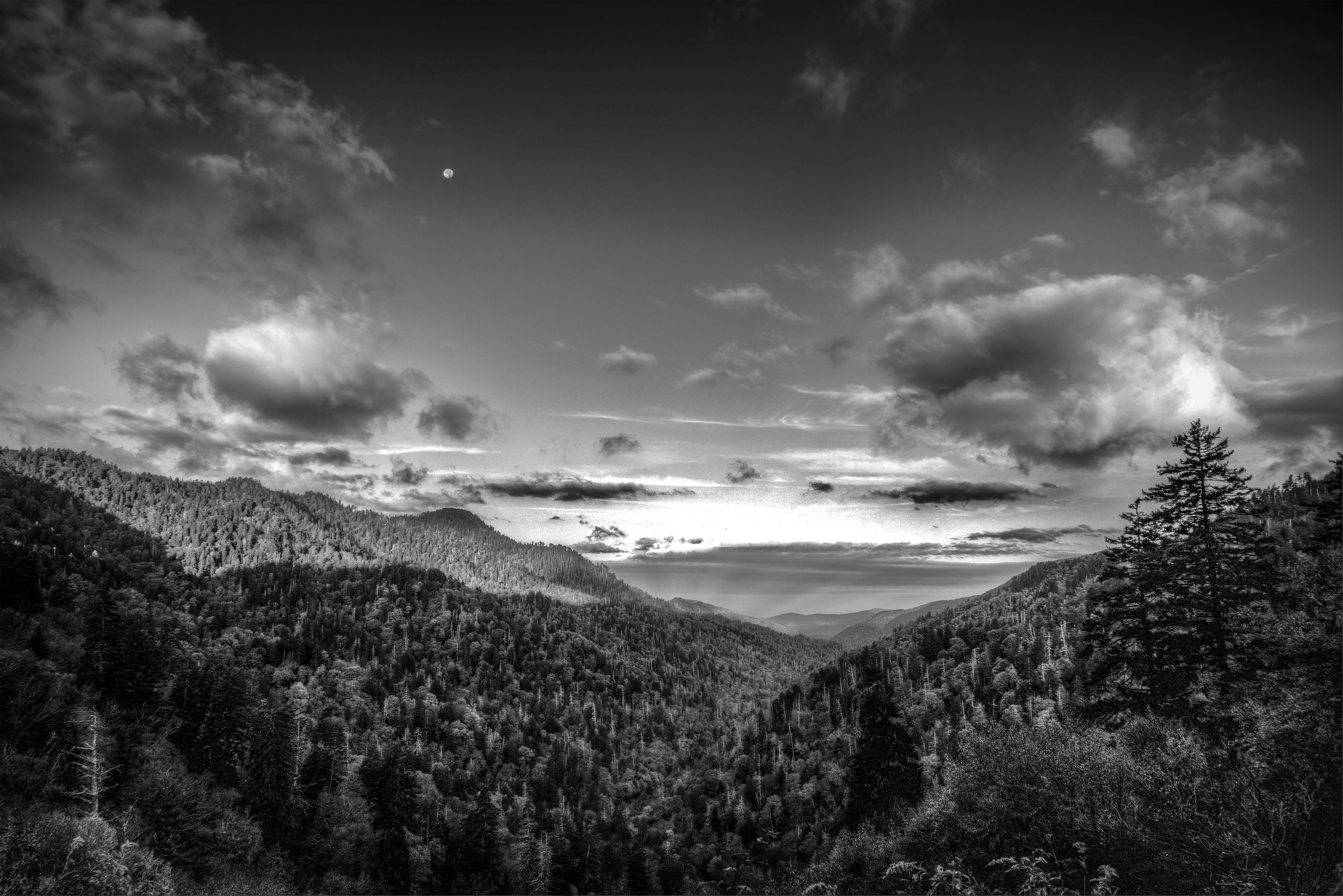 Smoky Mountain NP Monochrome