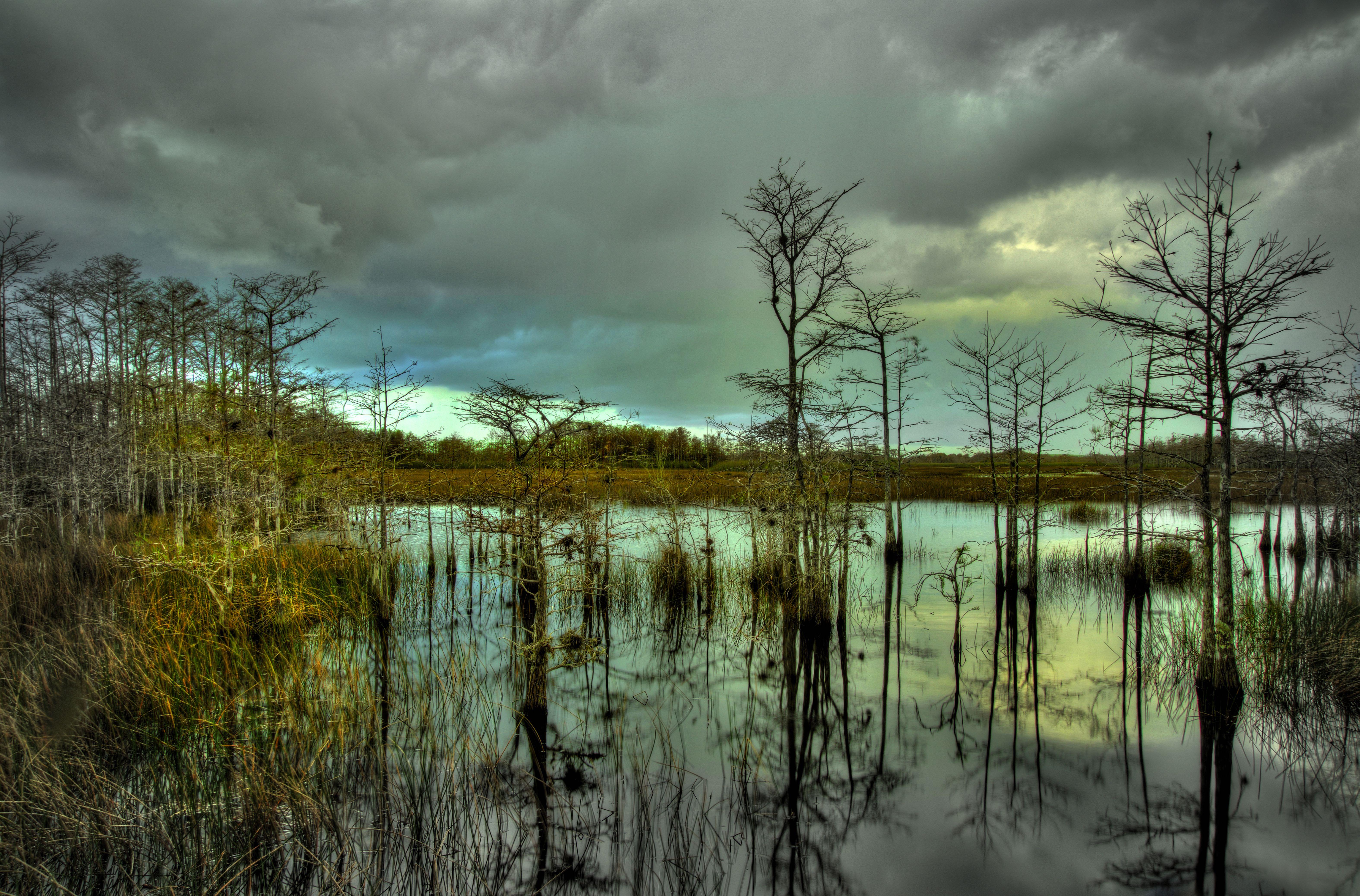 Cypress Hammock Florida