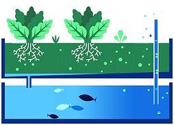 Aquaponie illustration
