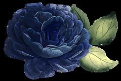 CollectifdelaCite_fleur-sans-fond-3.png