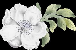 CollectifdelaCite_fleur-sans-fond-2.png
