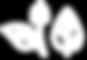HYPNOMUS_FEUILLES-SANS-FOND.png
